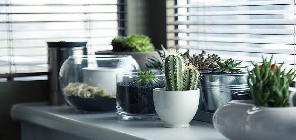 Quelles plantes mettre dans sa chambre et pourquoi ?